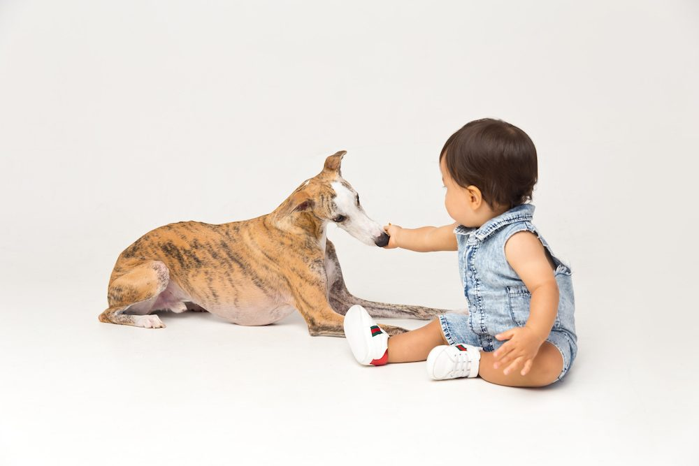 baby and pet photography